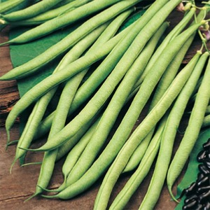 Climbing French Bean Seeds