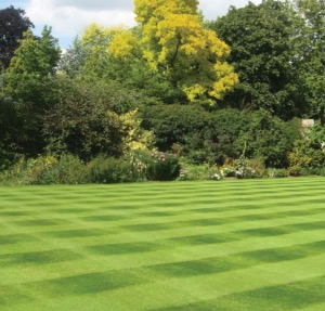 Grass Seeds For Lawns