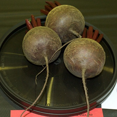 Beetroot Pablo F1 hybrid Seeds