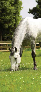HORSE AND PONY ACRE GRASS SEEDS 14 kg