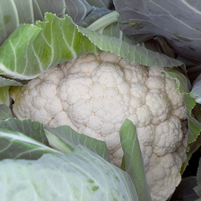 Cauliflower Seoul F.1 hybrid Seeds
