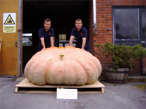 Pumpkins Large - Ian Patons Stock