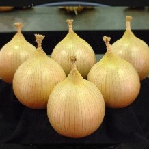 Giant Onion & Vegetable Seeds